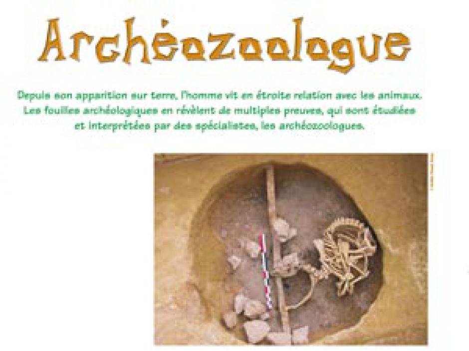 L'« archéozoologue », un archéologue (presque) comme les autres, Entretien avec Thierry Argant*
