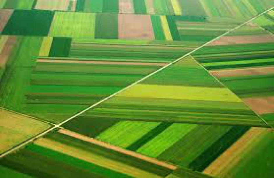 Qu'est-ce qu'une ingénieure agronome ? Entretien avec Élise Nerbusson*