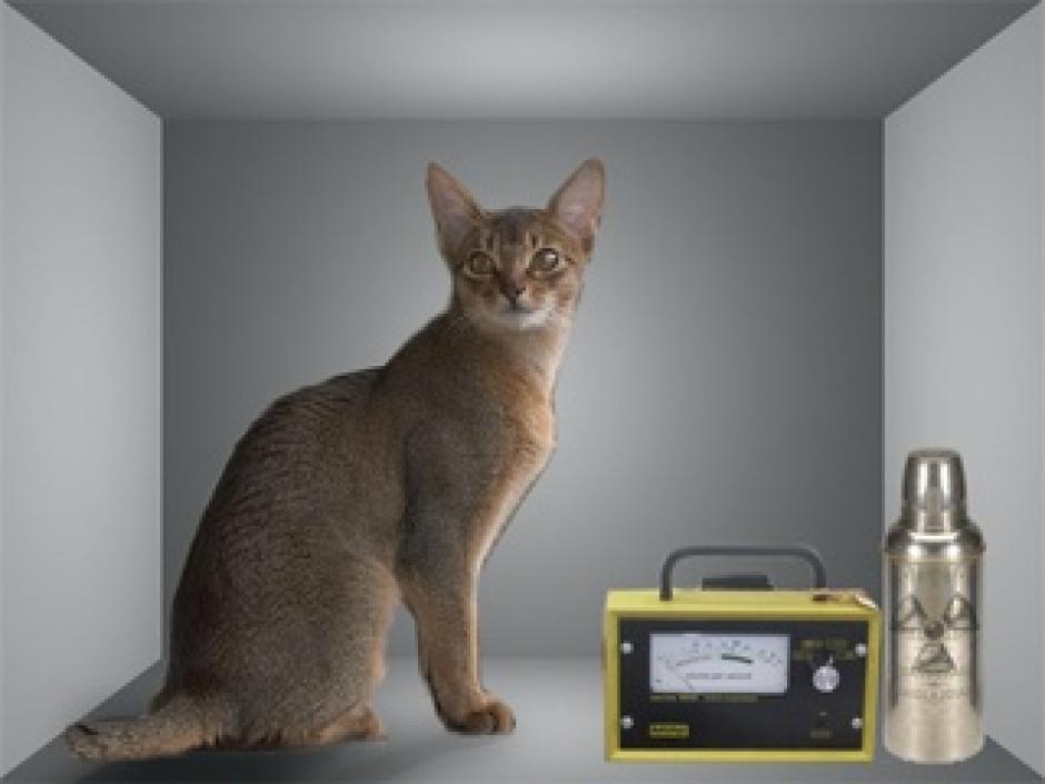 Le piège à photons : une affaire de chats, Olivier Gebuhrer